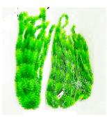 """צמח פלסטיק 60 ס""""מ"""